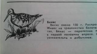 Бекас - Перелётная птица