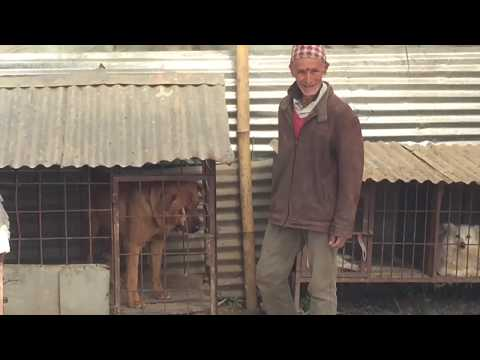 Old Man With 20 Breeds of Dog