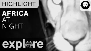 Africa at Night - Live Cam Highlight Compilation