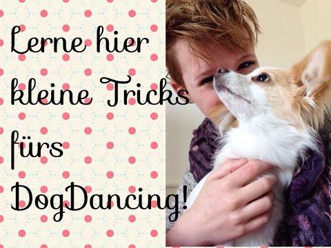 Kleine DogDance Tricks zum Nachmachen!