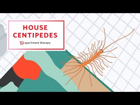 House Centipedes And How To Give Them The Boot