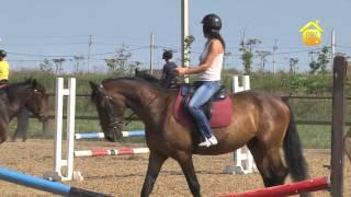 Выбор лошади и уход за ней // FORUMHOUSE