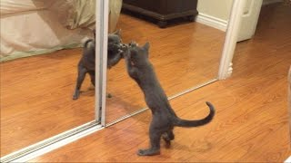 My cat running on the mirror
