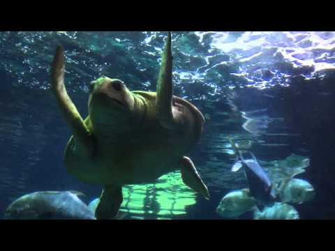 Virginia Aquarium In Virginia Beach - Review
