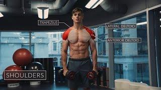 Exercise Anatomy: Shoulders Workout | Pietro Boselli
