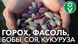 Секреты выращивания бобовых растений. Запись семинара