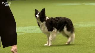 Impressive competitive dog dancing ('heelwork to music')... (sound on)