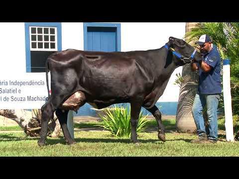 LOTE 52   REBECA -   4º LEILÃO FAMÍLIAS - DOMINGO, 13 DE JUNHO, 10HS - REMATEWEB PLUS