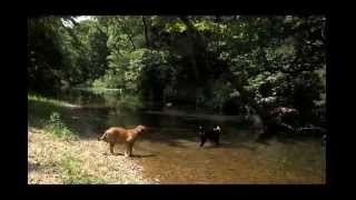 Dogue De Bordeaux Pup Learns To Love Water