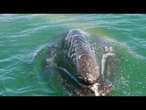 Whale watching. Baja