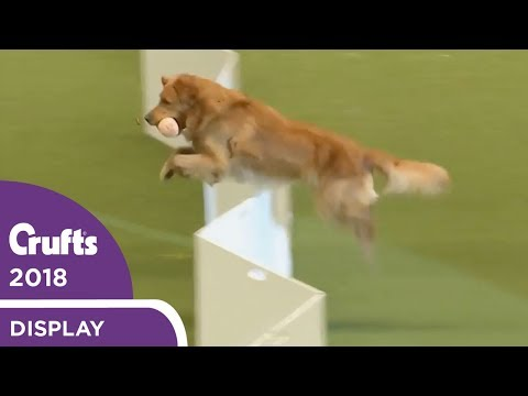 The Gundogs put on a Banging Display at Crufts 2018