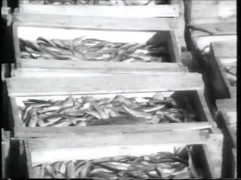 Virtsu Kalur 1971