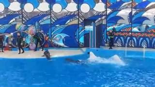 Vlog дельфинарий  в Сочи! Видео для детей и родителей!(Полезная информация для родителей и интересное видео для деток! Путешествуйте вместе снами - подписывайте..., 2016-07-28T16:18:26.000Z)