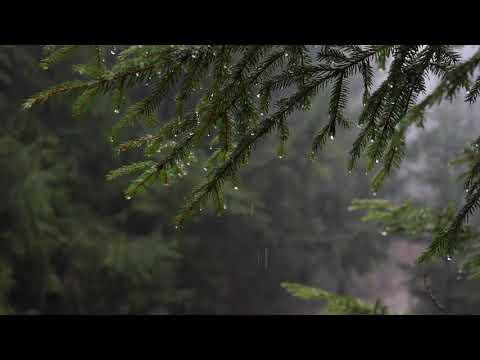 6 heures de pluie en foret