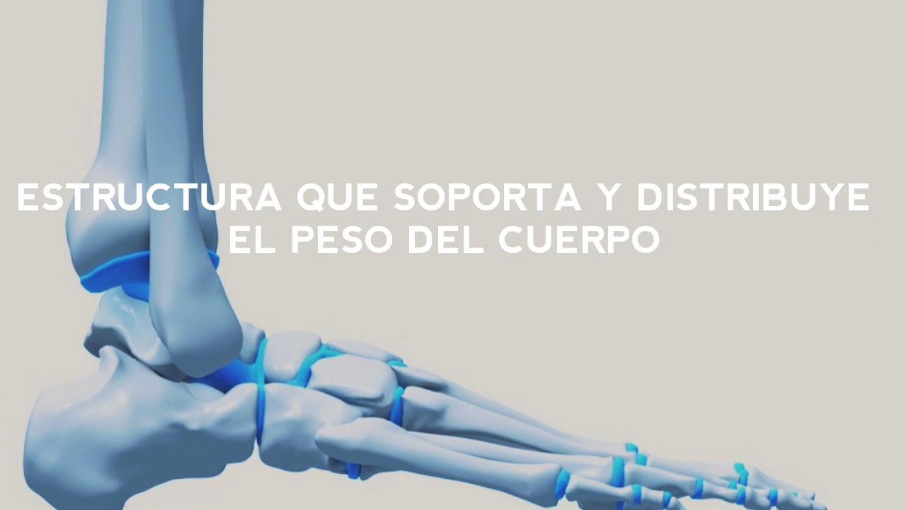 Mnemotécnia: Huesos del Tarso - YouTube