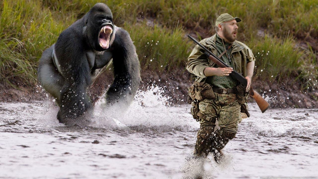 10 Animals That Got Revenge On Humans!