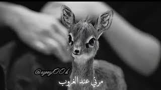 محمد عبده  مرني عند الغروب ظبي خالي من العيوب ( كوبليه)