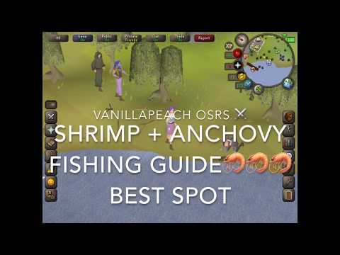 OSRS Beginner Fishing Guide Shrimp And Anchovy Best Spot