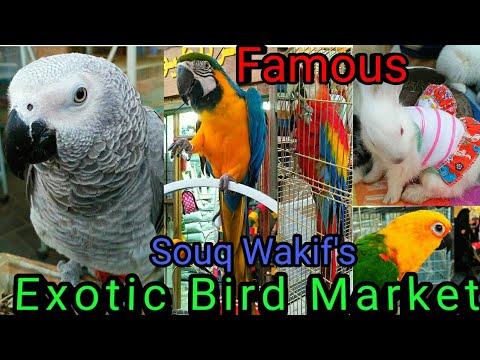 Exotic Bird market of DOHA | Pet market in Souq wakif | Irani market | Doha, Qatar | By Aftab Ansari