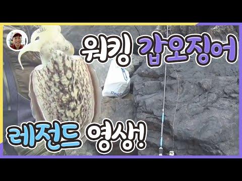 [밀루유떼]시화방조제 갑오징어 워킹루어낚�