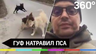 Гуф натравил овчарку на соседских собак