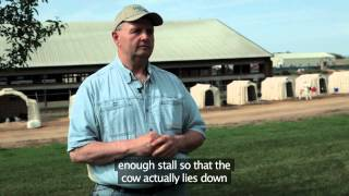 Barn Design From A Cow's Perspective