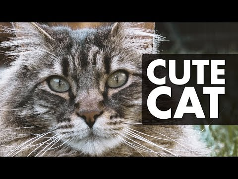 CATS MEOWING for 12 Hours Sound Effect