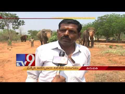 Elephants in Tirupati zoo freed - TV9