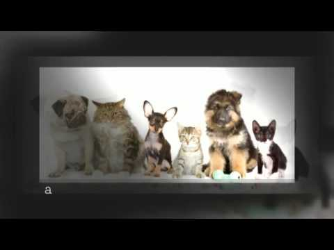 Eber and Associates Insurance Services Pet Insurance in Pittsburgh, Pa