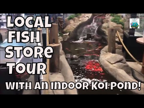 Fish Store Tour The Ocean Floor In Phoenix, AZ