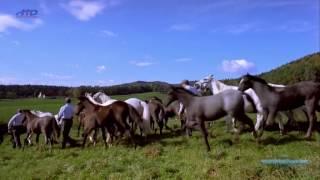 Королевские белые лошади. Испанская школа верховой езды в Вене
