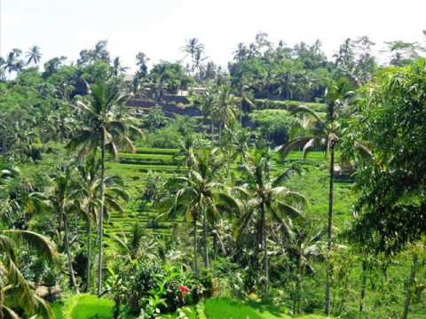 Exotic Property for sale in Bali, land for sale in Ubud Bali - TJUB222