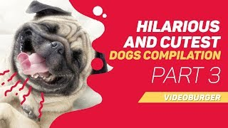 Hilarious and Cutest Dogs ❤️ Compilation of 2019 - PART 3