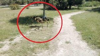 5 Lần Nhện Khổng Lồ Xuất Hiện Vô Tình Được Camera Quay Lại || 5 Giant Spider Caught On Camera