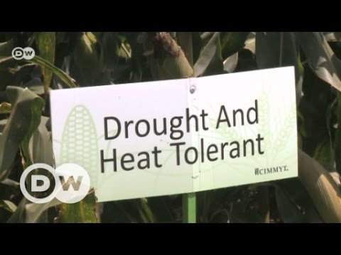Farmers adapting to climate change | DW English