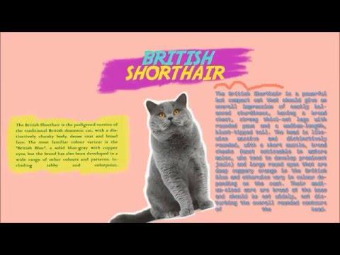 Report Text of Cat