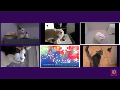 Cats Meowing JOY TO THE WORLD [Christmas Song] (Acapella)
