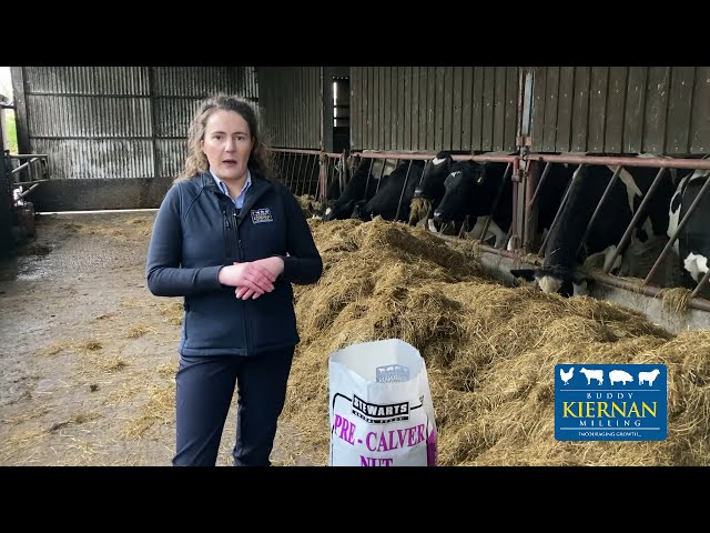 Why you should feed our Pre Calver Nut