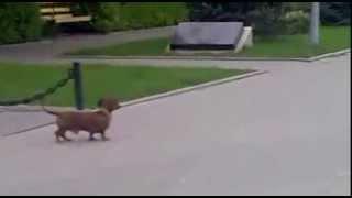 Дикие животные и домашняя собака
