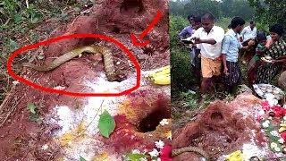 నాగులచవితి రోజు పూజ మద్యలో బయటకు వచ్చిన నాగరాజు | nagula chavithi | Garuda TV