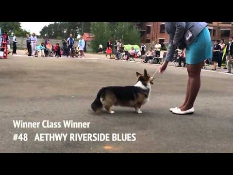 Corgis in Nightingale Land - 2013 / BEST MALE IN BREED Competition