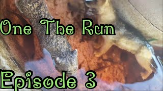 On The Run(EP3)-Toy Animal Series-