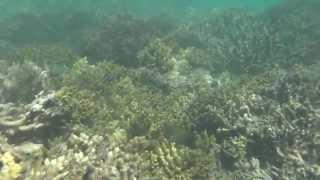かなり浅い所に珊瑚があるので、子供を抱っこしてシュノーケルさせるこ...