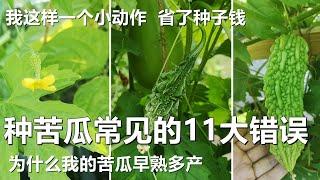 种苦瓜常见的11个大错误, 不花一分钱还早熟高产 How to grow lots of bittermelons