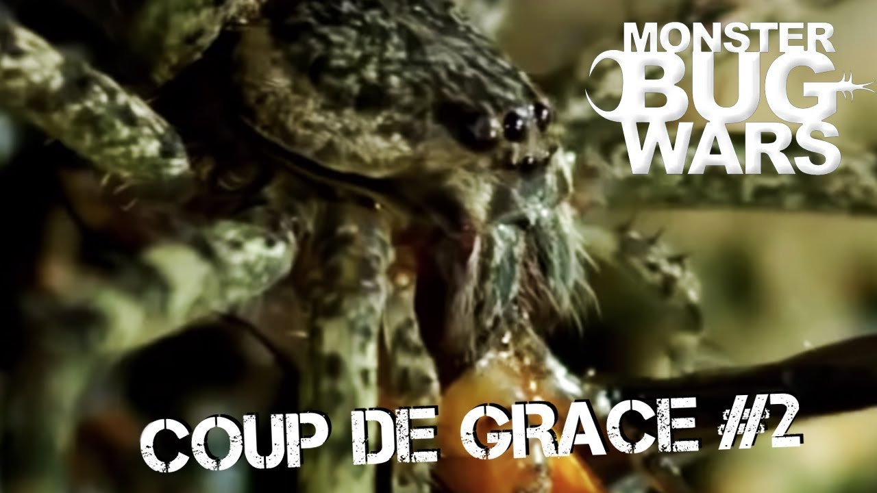 MONSTER BUG WARS | Coup De Grace Collection #2
