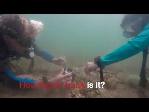 Volunteering at Marine Conservation Cambodia