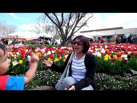 Tulip Time 2016 Bowral NSW