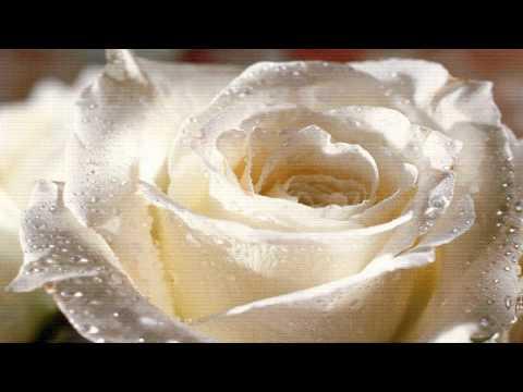 IS2 : การสำรวจความพึงพอใจในการเลือกซื้อดอกไม้