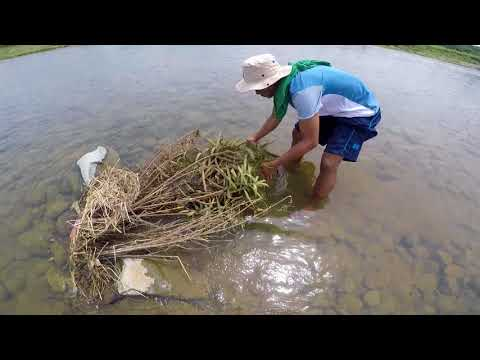 Fishing methods in the Municipality of San Mariano, The Philippines.