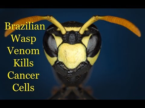 Brazilian Wasp Venom Kills Cancer Cells, But Not Healthy Cells 🐝 Mp3